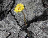 """Семинар """"Как изменить свою жизнь. Новое начало"""""""